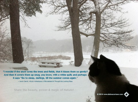 I wonder if the snow loves the trees DCD LewisCarroll quote Dela
