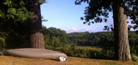 Oreo's morning walk-hunt along the Delaware River