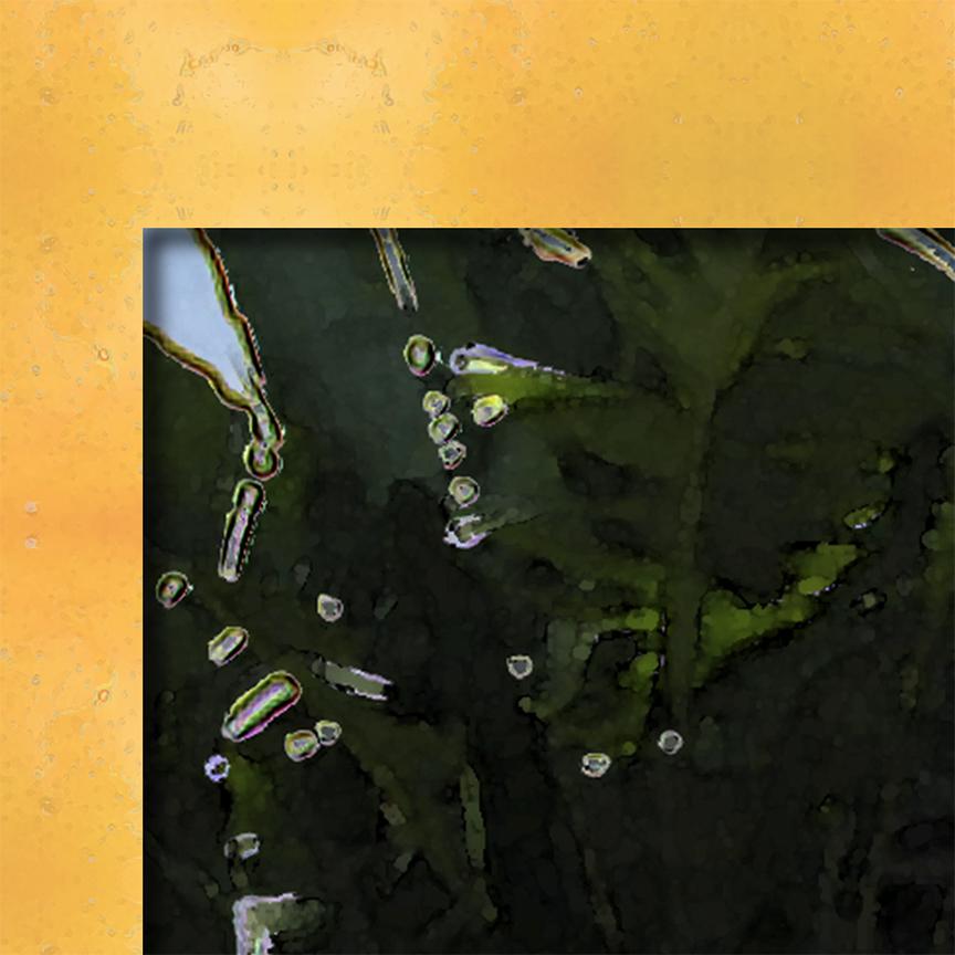 DISPLAY_DebraCortese_almostMangoSalsa_detail_mangopatterncorner12i