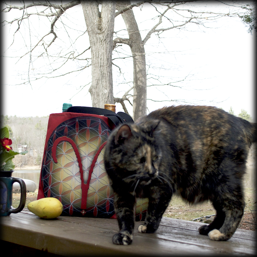 Curious cat interrupts Aries Tote Bag photo shoot - Debra Cortese Designs