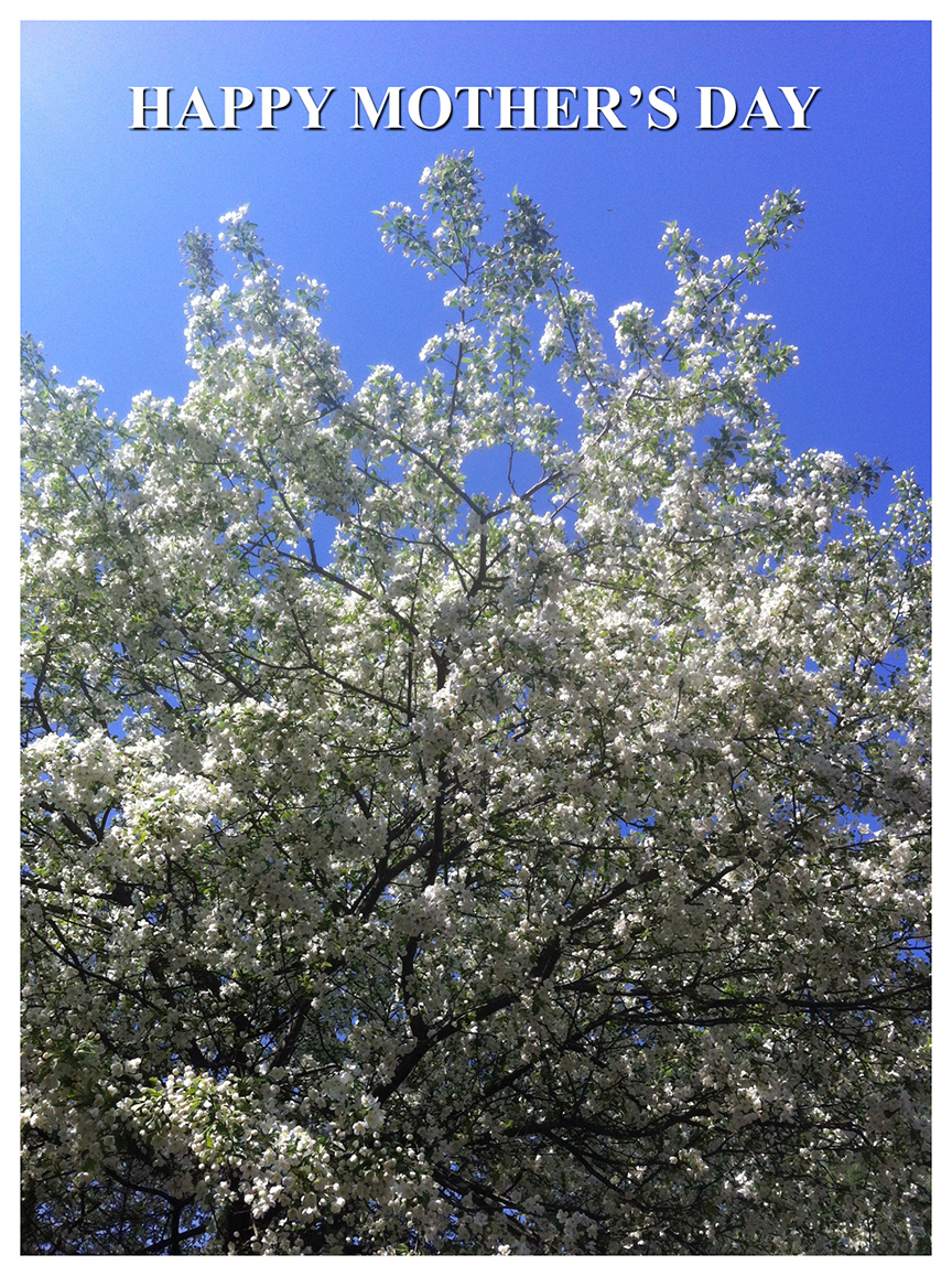 Happy Mother's Day image white blossoms tree by Debra Cortese ©2016