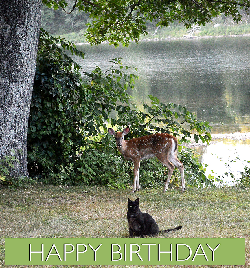 Happy Birthday Fawn and Squeeky Cat image by Debra Cortese ©2016