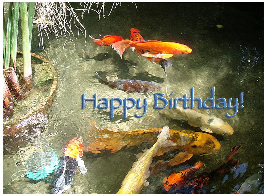 Happy Birthday Koi Pond image by Debra Cortese ©2012