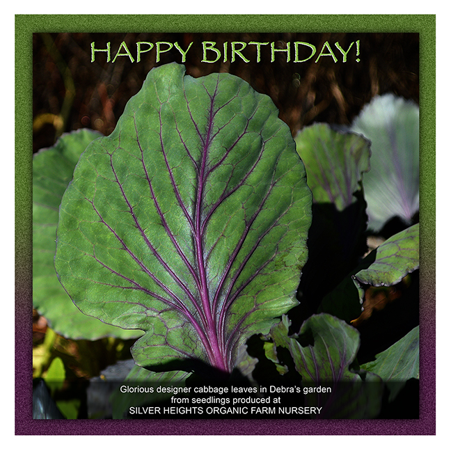 Glorious Cabbage Leaves Happy Birthday image by Debra Cortese ©2015