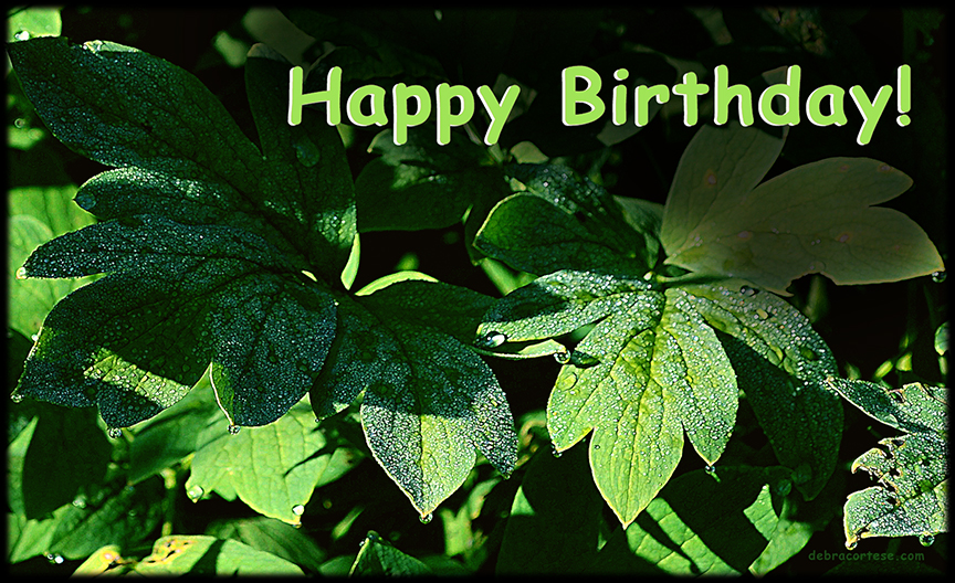 Diamond Dew Drops on Emerald Green Leaves Happy Birthday image by Debra Cortese ©2016