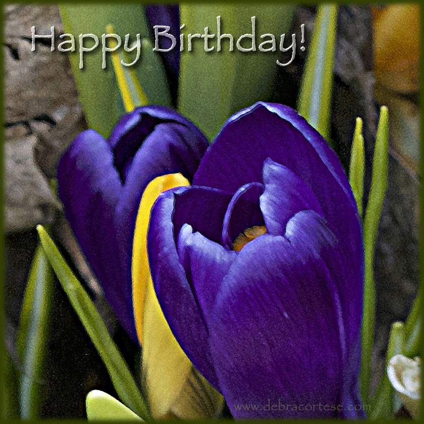 Spring Crocus Flowers Happy Birthday image by Debra Cortese ©2017