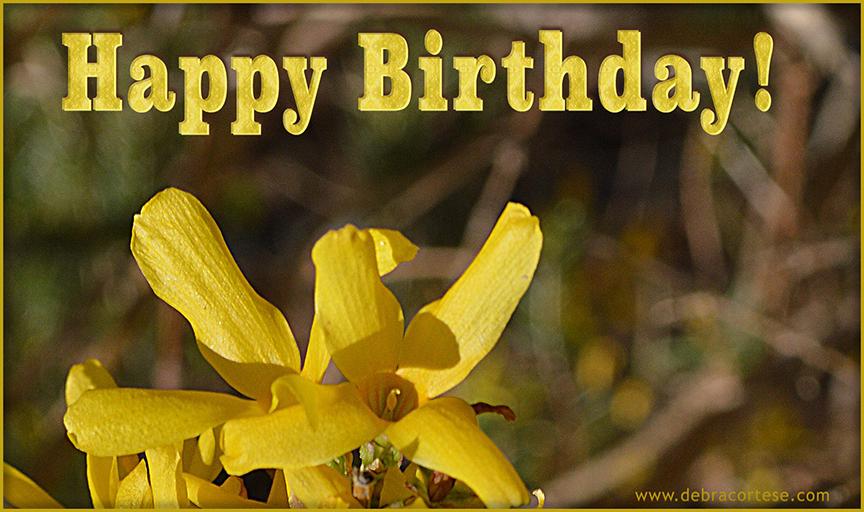 Happy Birthday Forsythia image by Debra Cortese ©2016