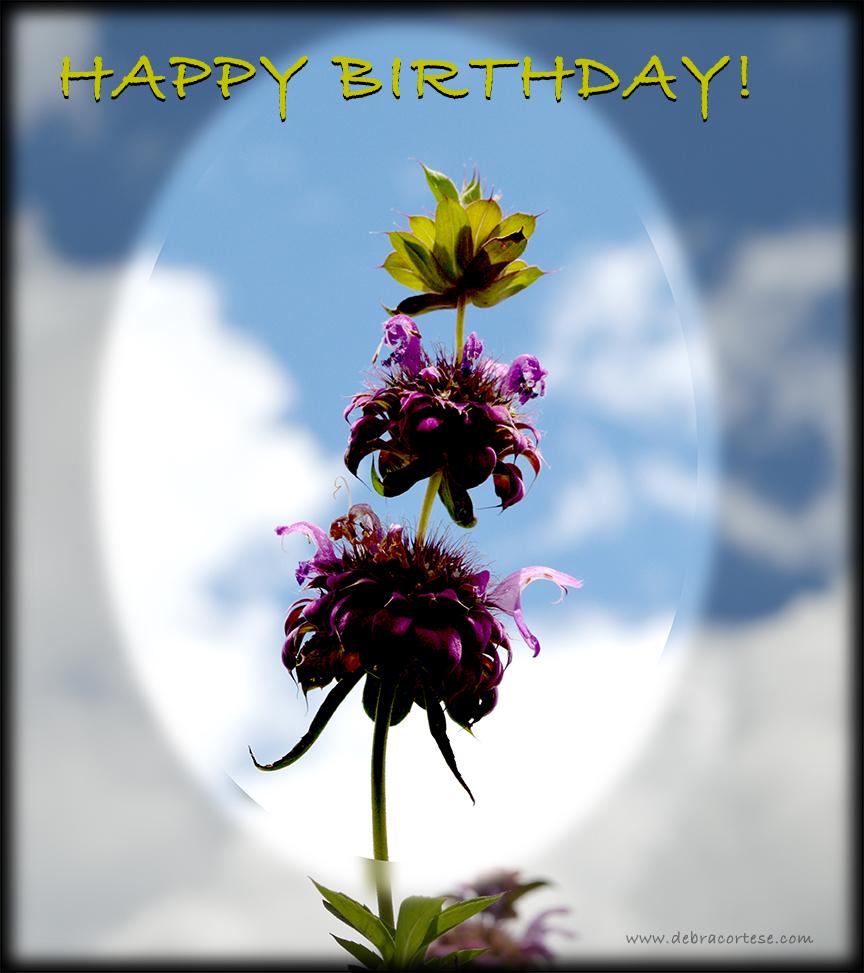 Happy Birthday Bee Balm image by Debra Cortese ©2016