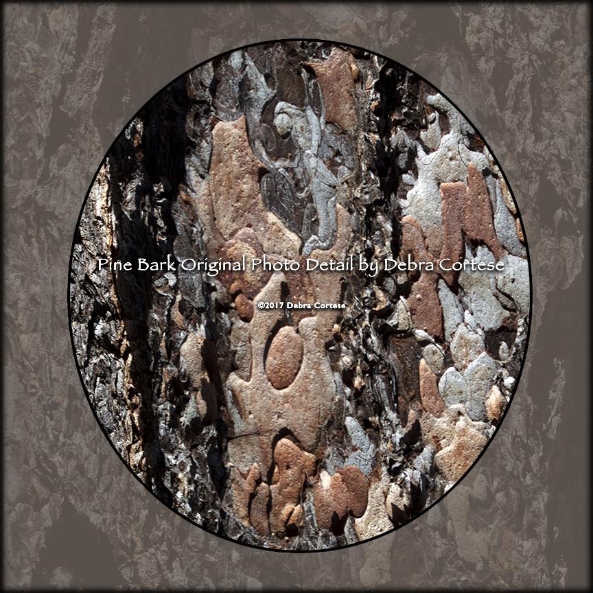Pine Bark original photo section by Debra Cortese Designs